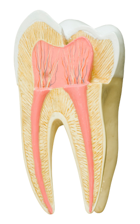 Root Canal Therapy at Clark Family Dental in Redmond, OR